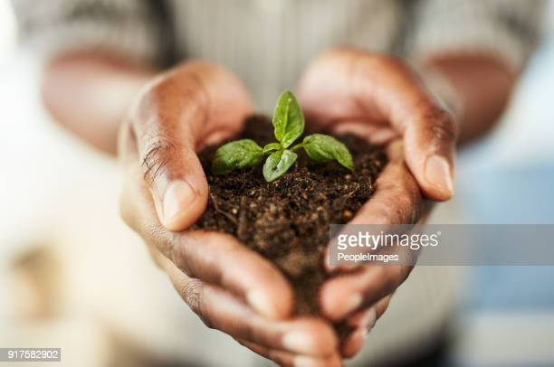 grow your own - sapling stock photos and pictures