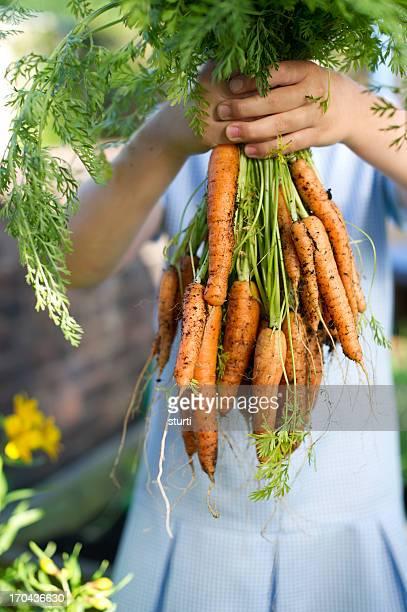 Steigere deine won harvest