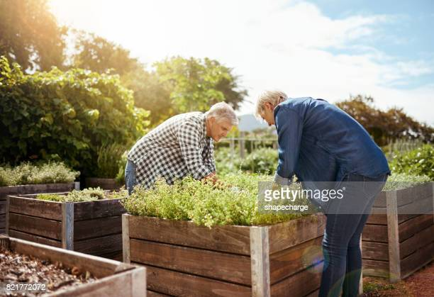 Kweken van een tuin hoeft niet te worden een solo-act