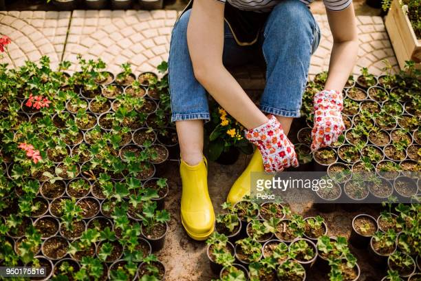 growing flowers - part time job stock pictures, royalty-free photos & images