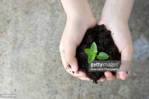 growing for the future - sustainability stock photos and pictures
