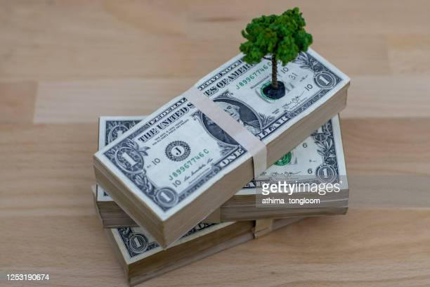 growing investments. heap of money with tree model. - guyana stock pictures, royalty-free photos & images