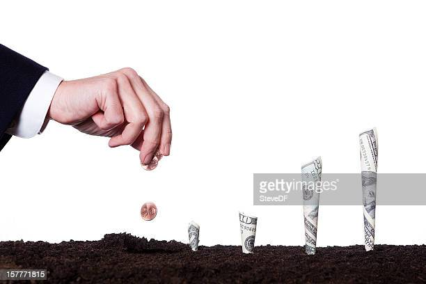 growing money - money tree stock photos and pictures
