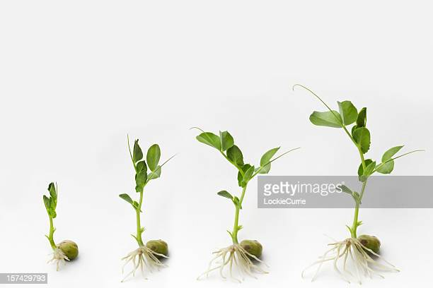 growing - seedling stock pictures, royalty-free photos & images