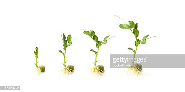 growing - sapling stock photos and pictures