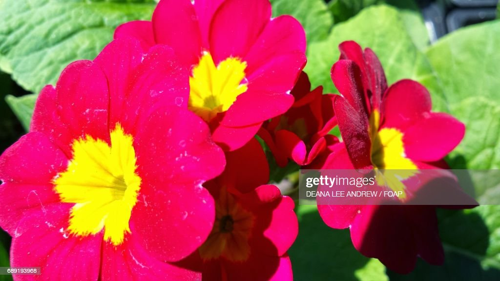 Growing pink flowers : Stock Photo