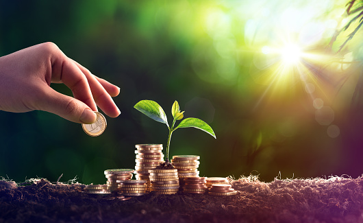 Growing Plant On Coins Money - Investment Concept 907280674