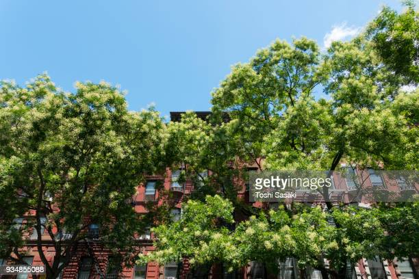 growing street trees surround the 14th street buildings at manhattan new york ny usa on jul. 09 2017. - jul photos et images de collection