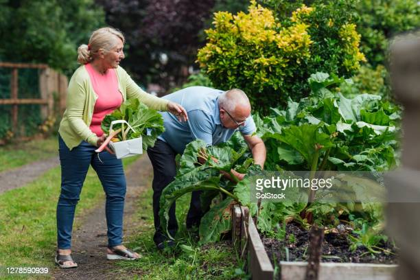 growing their own vegetables - horticulture stock pictures, royalty-free photos & images