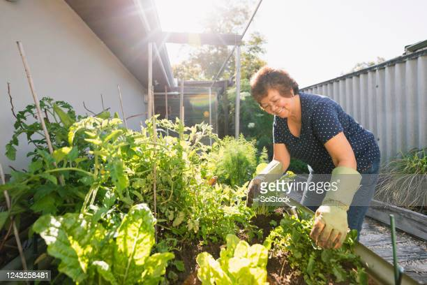 growing vegetables at home - gardening stock pictures, royalty-free photos & images
