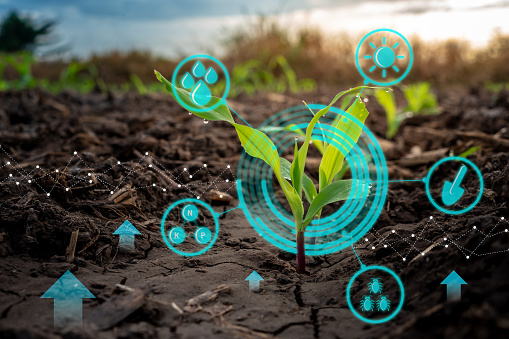 Growing young maize seedling in cultivated agricultural farm field with modern technology concepts 1065637672
