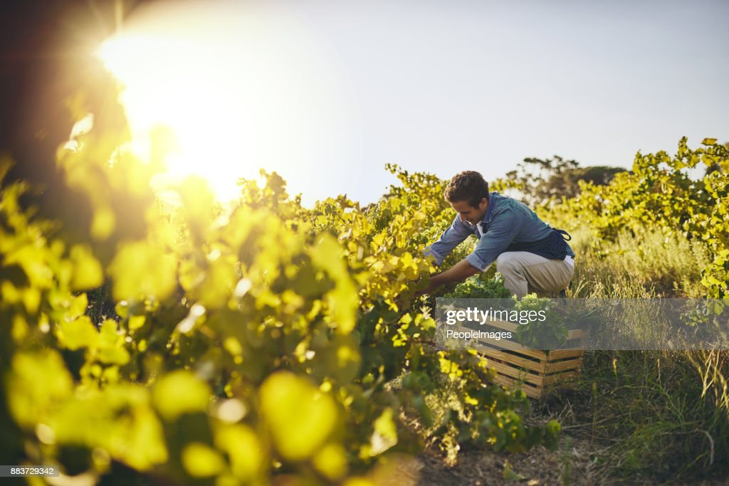 Grown with love and care : Stock Photo