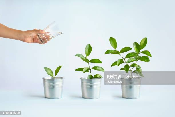 growth concept image. - cultivated stock pictures, royalty-free photos & images