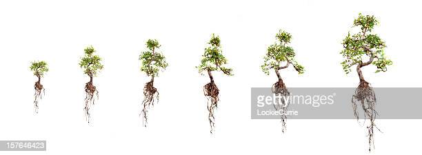 growth - origins stock pictures, royalty-free photos & images