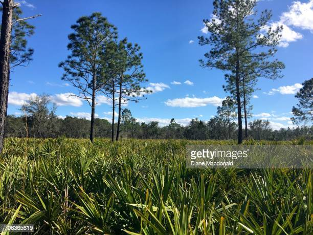 growth - palmetto florida stock pictures, royalty-free photos & images