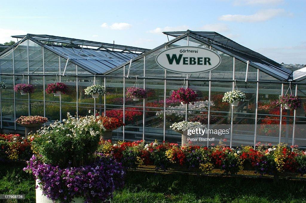 Gärtnerei Weber Gewächshaus Niedersachsen Deutschland Europa LogoSchild  AussenBepflanzung GartenPflanzen Pflanze GondelPflanze Topf Töpfe Blumen  Blume