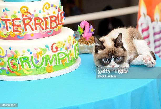 "Grumpy Cat aka Tardar Sauce attends Grumpy Cat's ""Grumpiest"" Birthday Bash at 404 10th Avenue on April 29, 2014 in New York City."