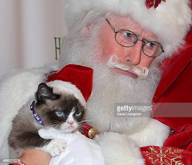 Grumpy Cat and Santa Claus attend the 84th Annual Hollywood Christmas Parade on November 29, 2015 in Hollywood, California.