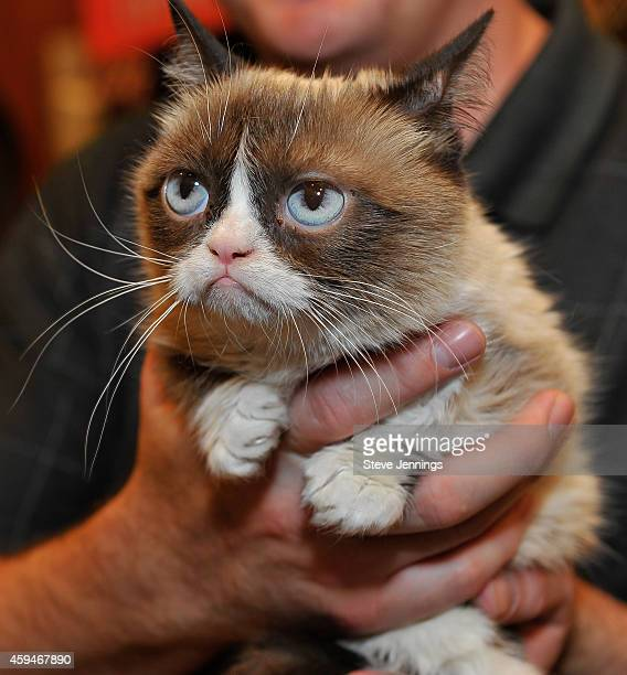 Grumpy Cat appears at Lifetime's Grumpy Cat's Worst Christmas Ever event at Macy's Union Square on November 21 2014 in San Francisco California