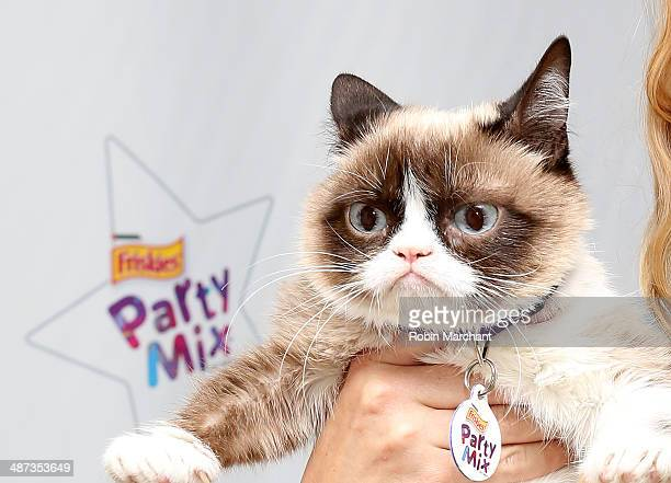 Grumpy Cat Attends Cats Grumpiest Birthday Bash At 404 10th Avenue On April