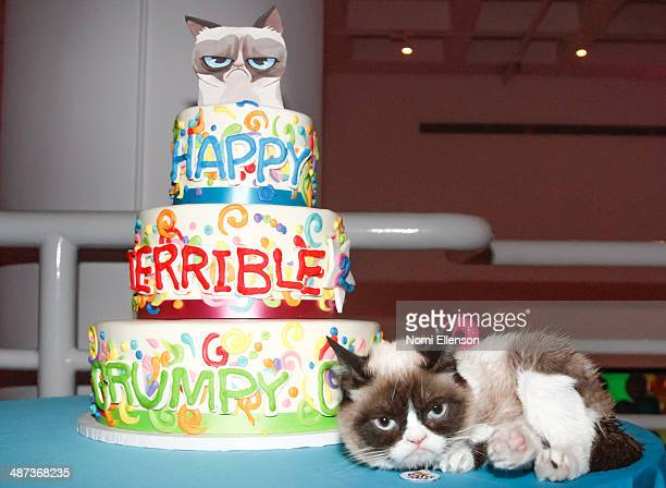 Grumpy Cat attends Grumpy Cat's 'Grumpiest' Birthday Bash at 404 10th Avenue on April 29 2014 in New York City