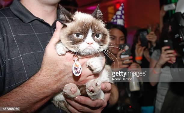 Grumpy Cat attends Grumpy Cat's Grumpiest Birthday Bash at 404 10th Avenue on April 29 2014 in New York City