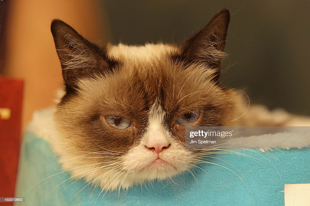 'Grumpy Guide To Life: Observations From Grumpy Cat' Book Event : ニュース写真