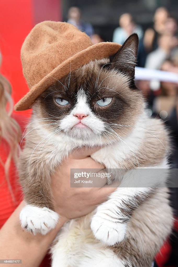 Grumpy Cat attends the 2014 MTV Movie Awards at Nokia Theatre LA Live on April 13, 2014 in Los Angeles, California.