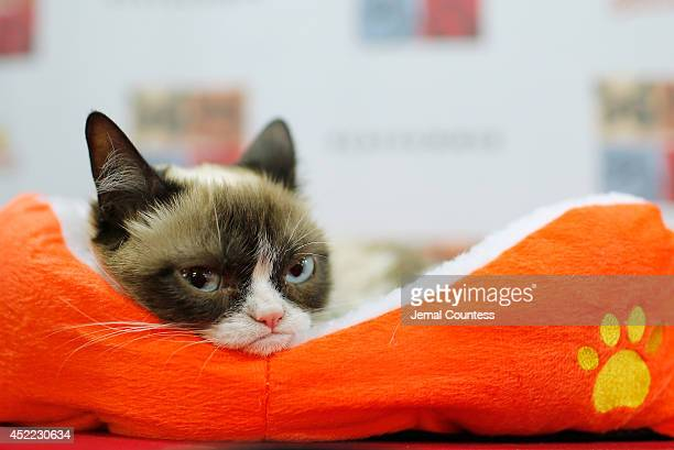 Grumpy Cat attends the Cat Summer video launch party at Bleecker Street Records on July 16 2014 in New York City