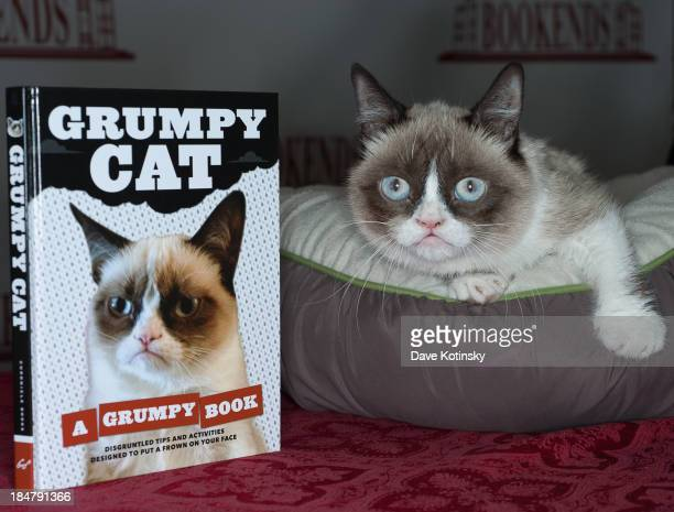 Grumpy Cat attends the Grumpy Cat A Grumpy Book Book Event at Bookends Bookstore on October 16 2013 in Ridgewood New Jersey