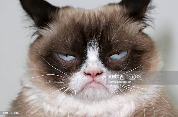Grumpy Cat attends The Grumpy Guide to Life Observations by Grumpy Cat book launch party at Kitson Santa Monica on August 4 2014 in Santa Monica...