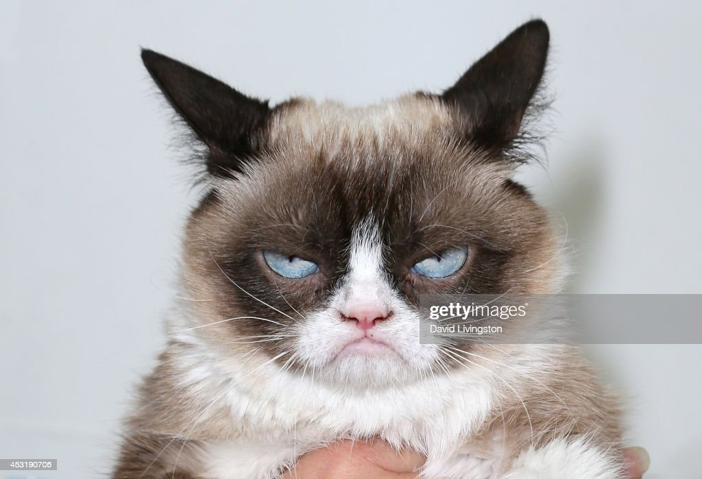 'The Grumpy Guide To Life: Observations By Grumpy Cat' Book Launch Party : News Photo