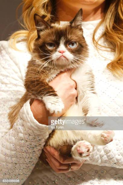 Grumpy Cat Pictures and Photos - Getty Images