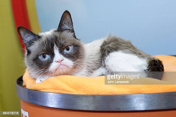 Grumpy Cat is presented to the press during Friskies Create Taste Kitchen Press Preview on August 19 2015 in New York City