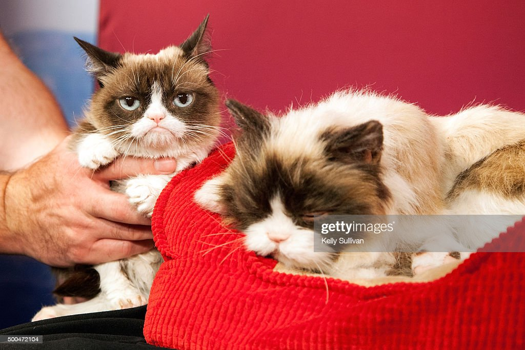Grumpy Cat is unimpressed with her animatronic counterpart at Madame Tussauds San Francisco on December 8, 2015 in San Francisco, California.