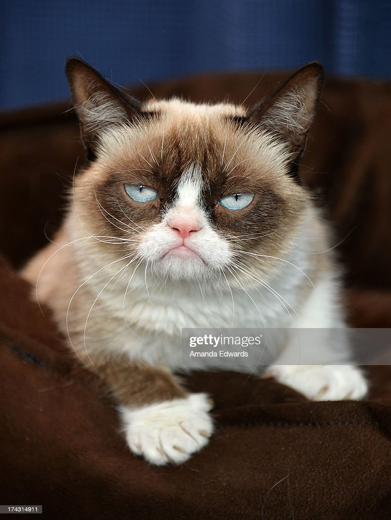 Image of: Cat Memes Grumpy Cat Makes An Appearance At Kitson Santa Monica To Promote Her New Book grumpy Zazzle Grumpy Cat Celebrity Cat Stockfotos En beelden