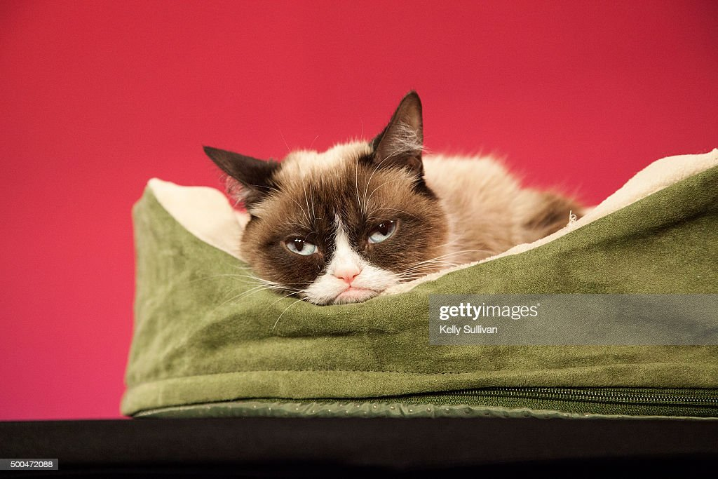 Grumpy Cat makes an appearance at Madame Tussauds San Francisco on December 8, 2015 in San Francisco, California.