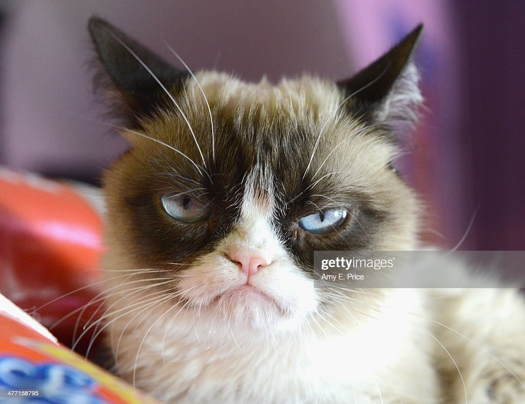 'Grumpy Cat' poses during the 2014 SXSW Music, Film + Interactive Festival on March 7, 2014 in Austin, Texas.