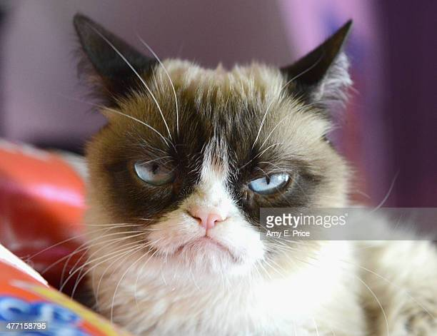 Grumpy Cat poses during the 2014 SXSW Music Film Interactive Festival on March 7 2014 in Austin Texas