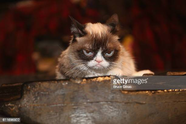 Grumpy Cat poses on the set as she makes her broadway debut in Cats on Broadway at The Neil Simon Theatre on September 30 2016 in New York City