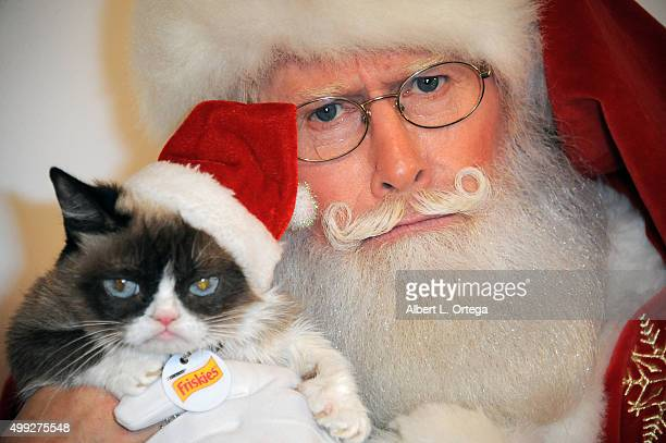 Grumpy Cat posese with Santa Claus at the 84th Annual Hollywood Christmas Parade held at The Roosevelt Hotel on November 29, 2015 in Hollywood,...