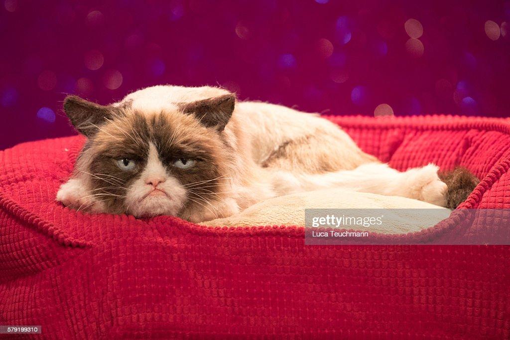 Grumpy Cat Visits His Animatronic Figure At Madame Tussauds : Nachrichtenfoto