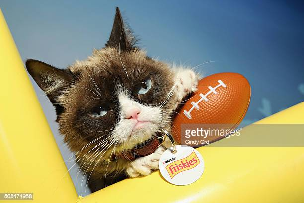 Grumpy Cat visits the SiriusXM set at Super Bowl 50 Radio Row at the Moscone Center on February 4 2016 in San Francisco California