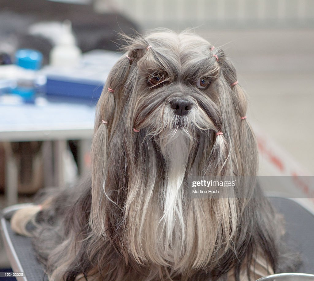 Grumpy dog : Stock Photo