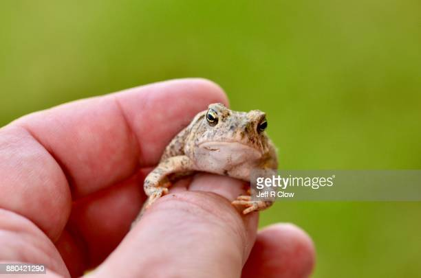 Grumpy Toad in Hand 8