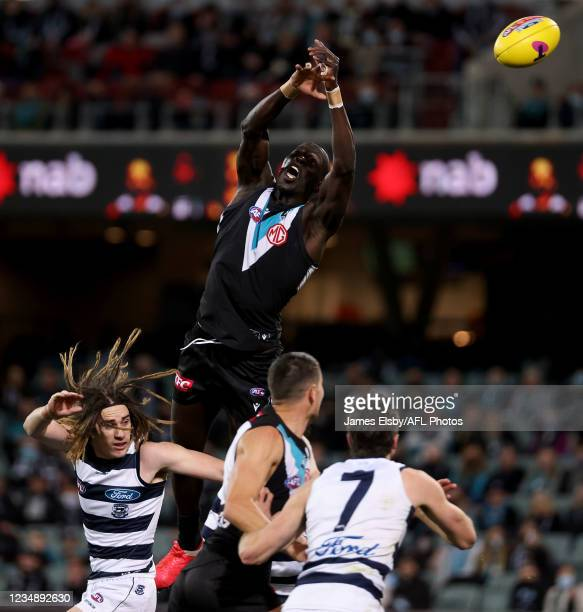 Gryan Miers of the Cats clashes with Aliir Aliir of the Power during the 2021 AFL Round 23 match between the Adelaide Crows and the North Melbourne...
