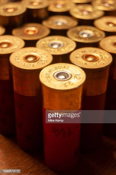 12 guage shotgun shells as used by the hunters during their annual duck and upland game bird hunting in Minot North Dakota United States These...