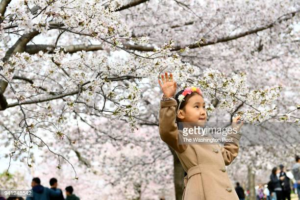Guamaral SodErdene poses for photos for her mother near the Washington Monument on Easter where most of the trees are in full bloom unlike the tidal...