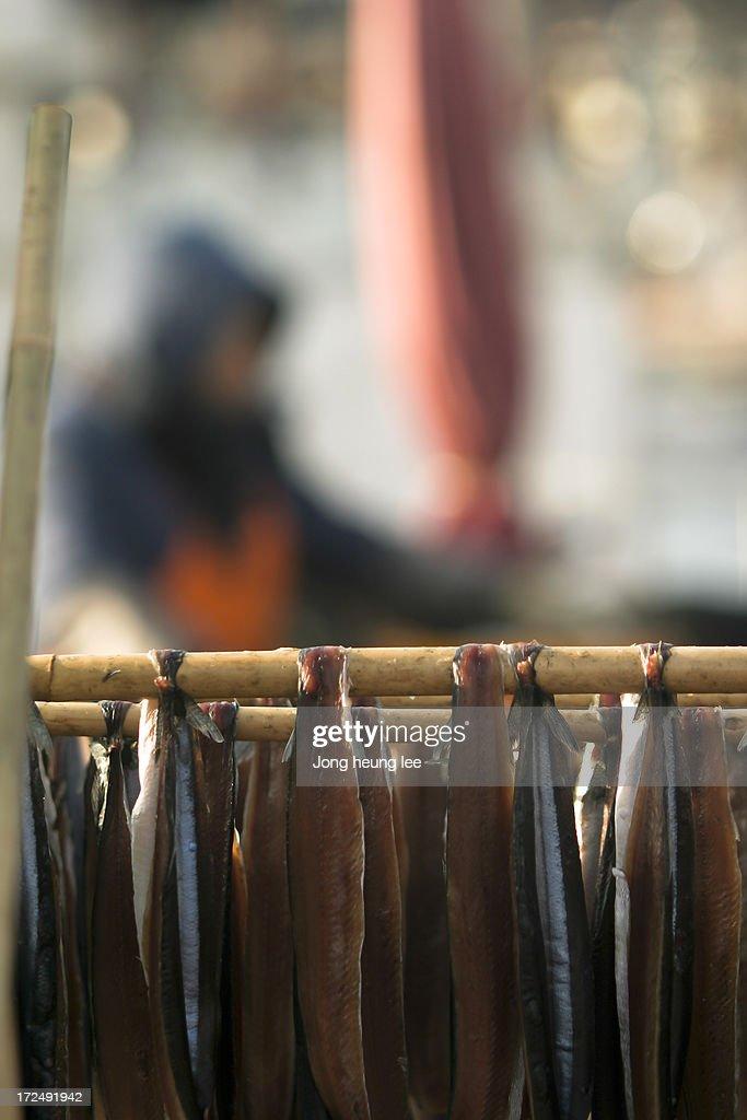 Guamegi(half dried saury) : Stock Photo