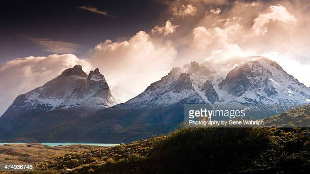 guanoco in mountainous landscape - chile stock pictures, royalty-free photos & images